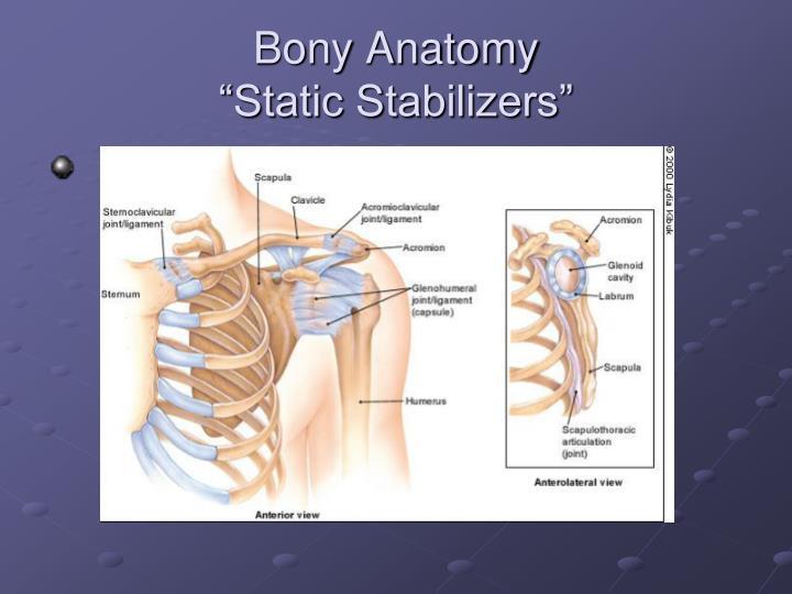 Bony Anatomy