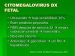 citomegalovirus dx fetal1