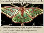 la proyecci n del luz en el medio natural afecta a los ciclos reproductivos de los insectos