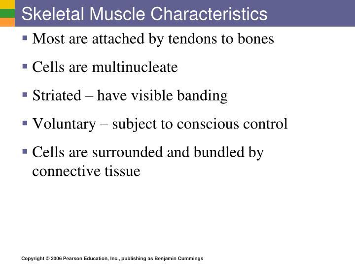 Skeletal Muscle Characteristics