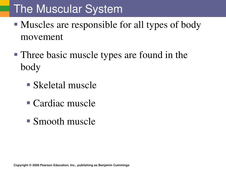 The muscular system1