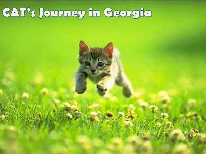 cat s journey in georgia n.
