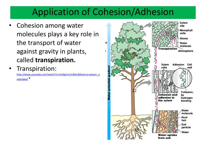 Application of Cohesion/Adhesion