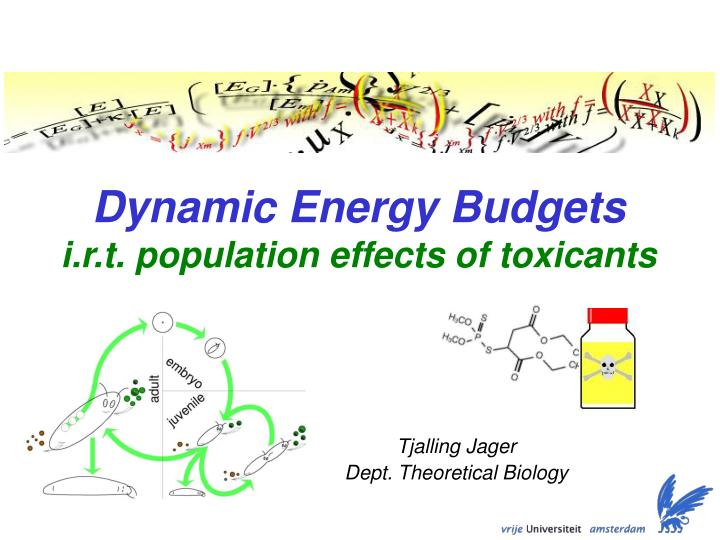 dynamic energy budgets i r t population effects of toxicants n.