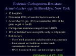 endemic carbapenem resistant acinetobacter spp in brooklyn new york
