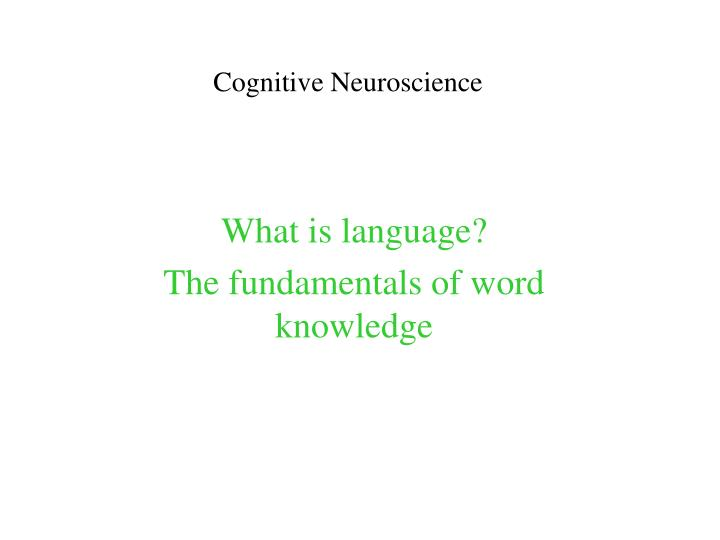 cognitive neuroscience n.