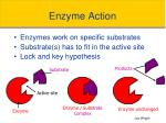 enzyme action