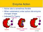 enzyme action1