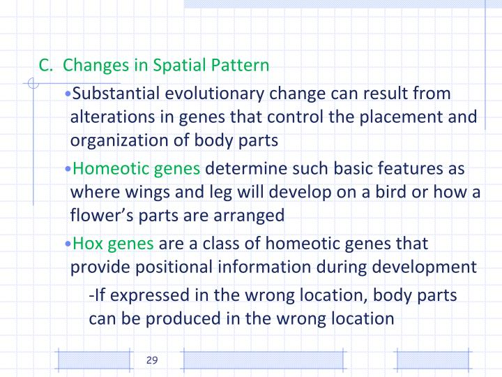C.  Changes in Spatial Pattern