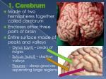 1 cerebrum