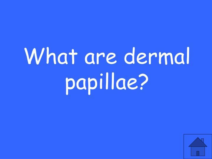 What are dermal papillae?