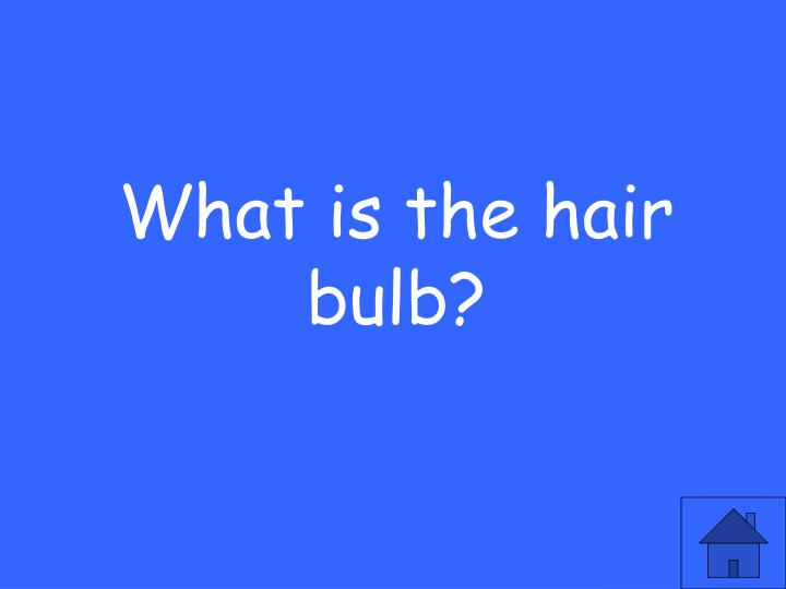 What is the hair bulb?