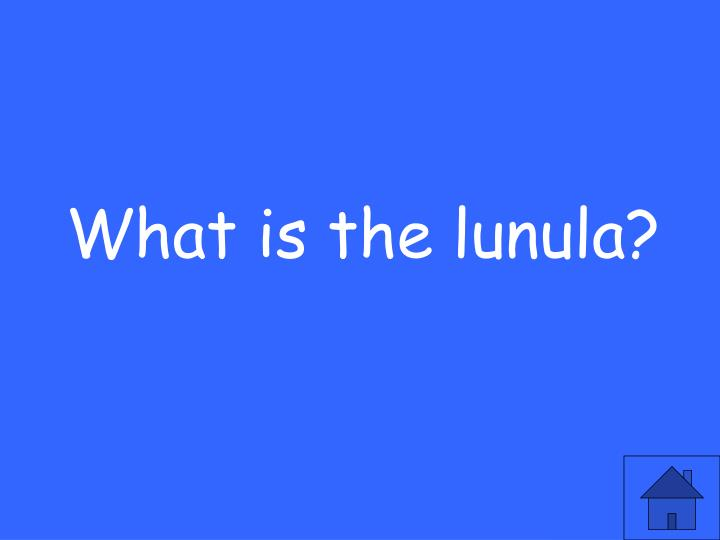 What is the lunula?