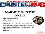 marijuana in the brain