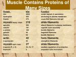 muscle contains proteins of many sizes