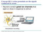 concept 48 3 action potentials are the signals conducted by axons