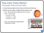 how color vision works trichromatic theory of color vision