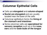 columnar epithelial cells