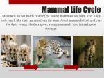 mammal life cycle