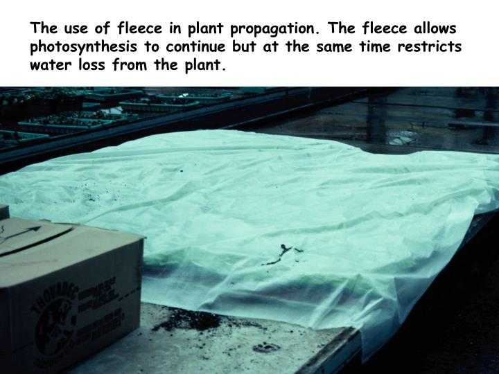 The use of fleece in plant propagation