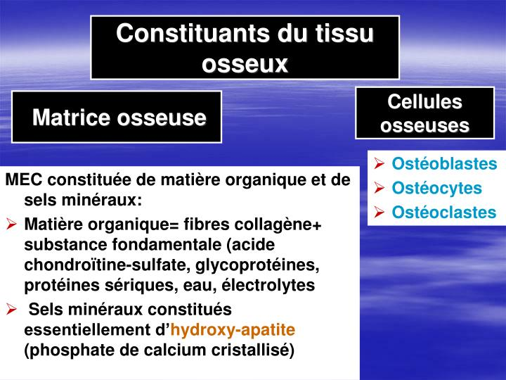 Constituants du tissu osseux