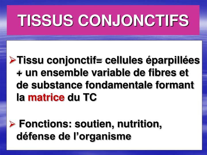 Tissus conjonctifs1