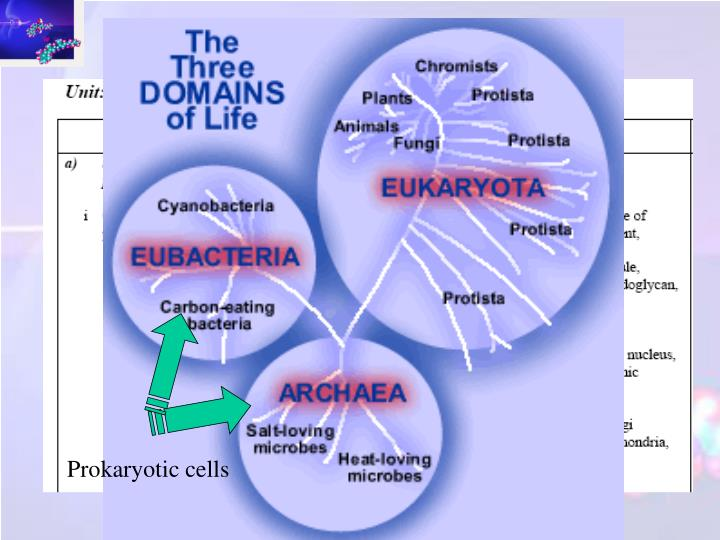 biological classification of organisms an open ended