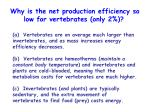why is the net production efficiency so low for vertebrates only 2