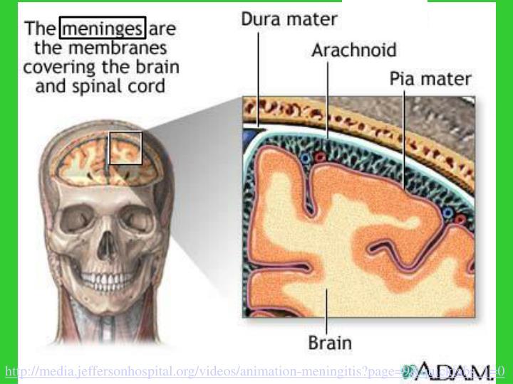 http://media.jeffersonhospital.org/videos/animation-meningitis?page=9&quicktabs_1=0