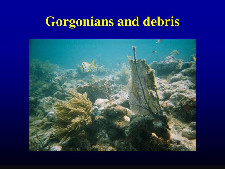 Gorgonians and debris