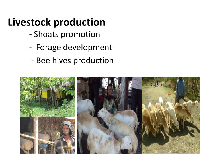 Livestock production