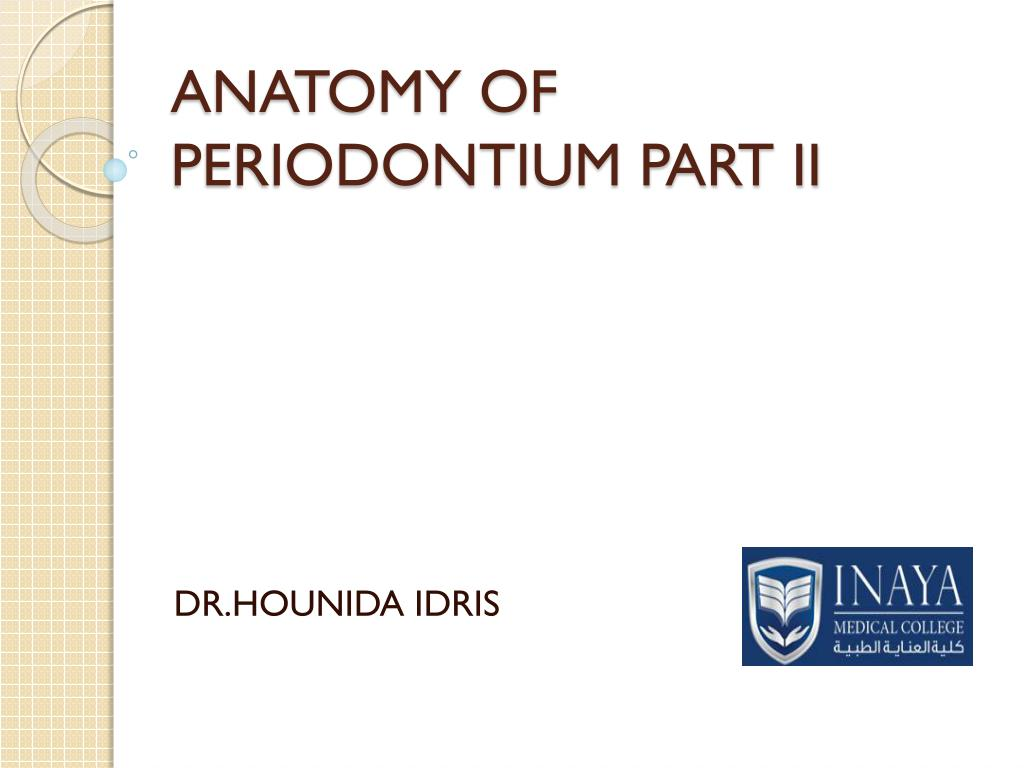 Ppt Anatomy Of Periodontium Part Ii Powerpoint Presentation Id