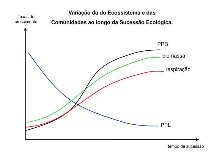 Variação da do Ecossistema e das Comunidades ao longo da Sucessão Ecológica.