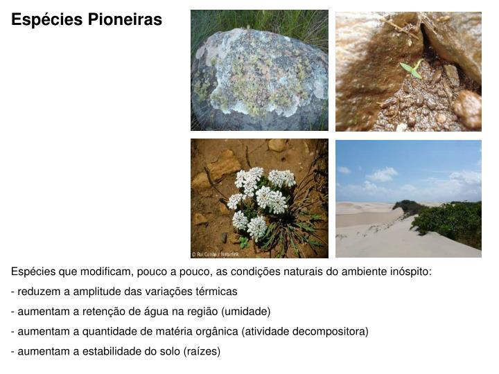 Espécies Pioneiras