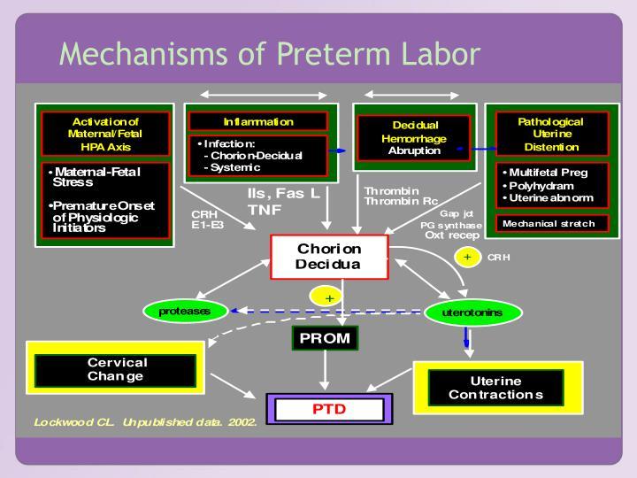 Mechanisms of Preterm Labor