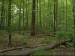 a minnesota forest comparison1