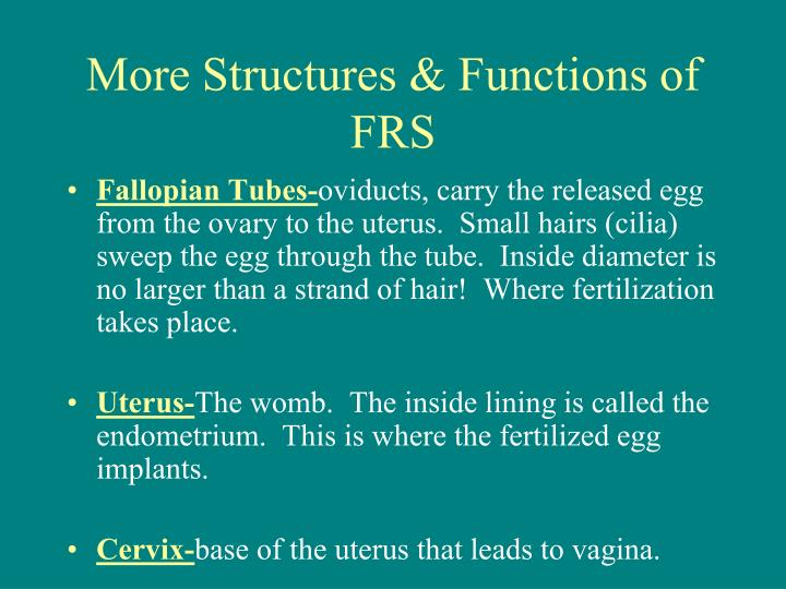More Structures & Functions of