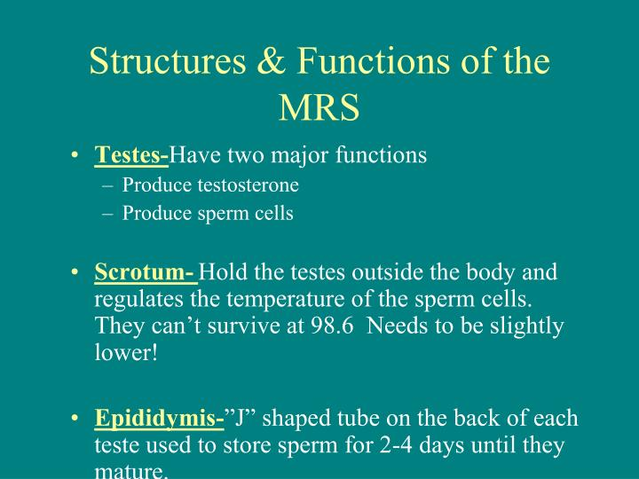 Structures & Functions of the
