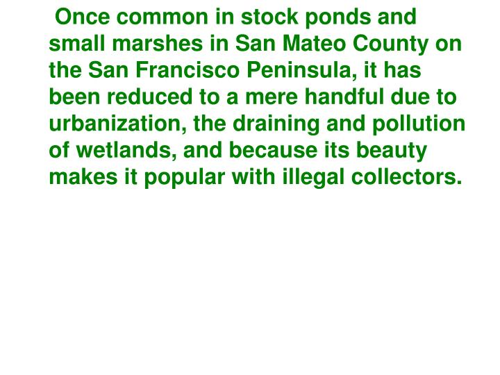 Once common in stock ponds and small marshes in San Mateo County on the San Francisco Peninsula, it has been reduced to a mere handful due to urbanization, the draining and pollution of wetlands, and because its beauty makes it popular with illegal collectors.