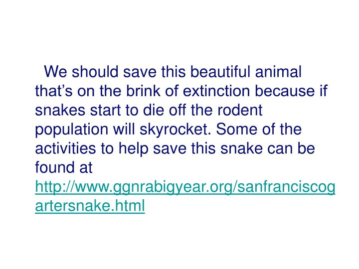 We should save this beautiful animal that's on the brink of extinction because if snakes start to die off the rodent population will skyrocket. Some of the activities to help save this snake can be found at