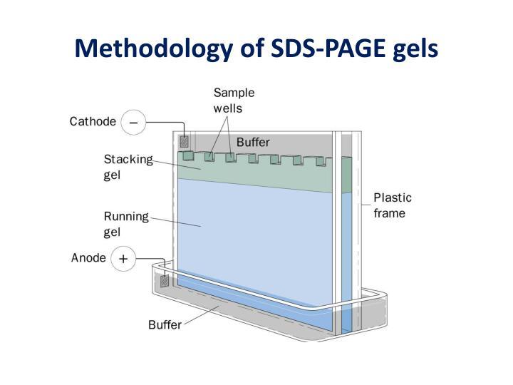Methodology of sds page gels