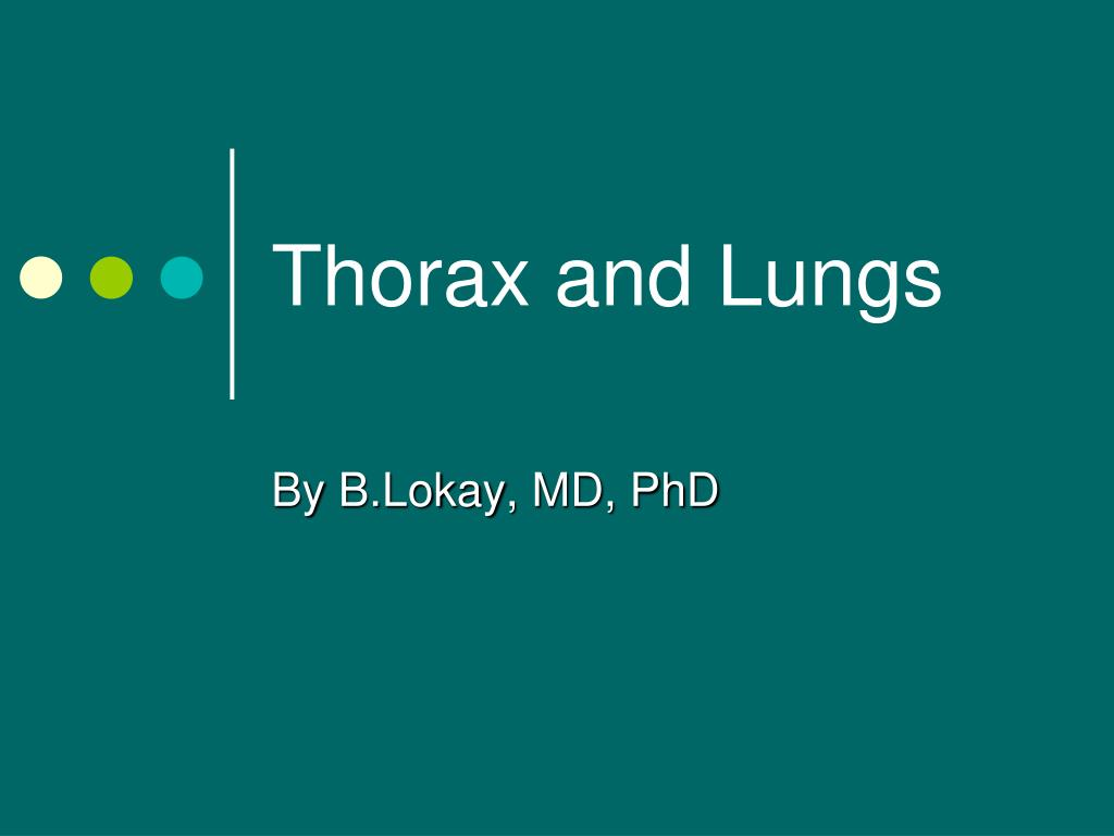 PPT - Thorax and Lungs PowerPoint Presentation - ID:5657219