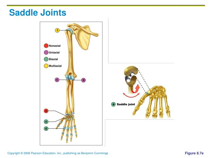 Ppt Joints Powerpoint Presentation Id5660549