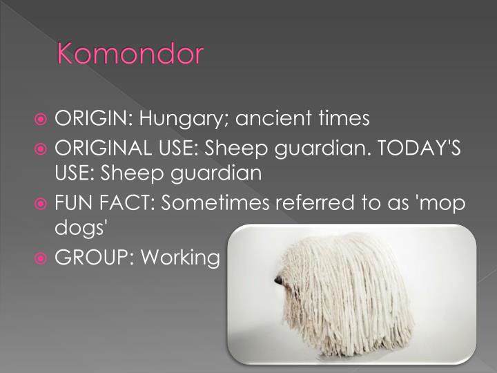 Komondor
