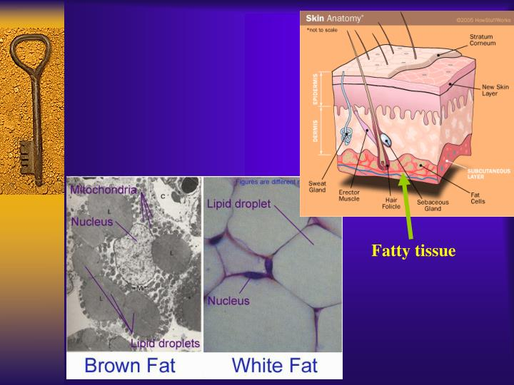 Fatty tissue