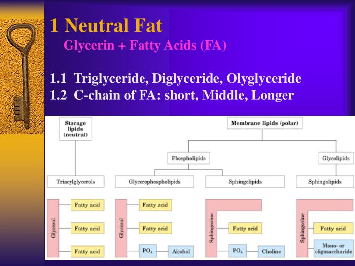 1 Neutral Fat