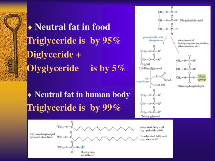 Neutral fat in food