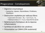 phagocytose cons quences