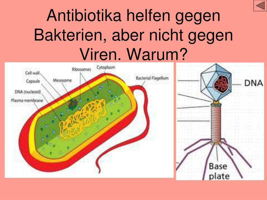 Antibiotika gegen viren   Warum Antibiotika nicht gegen