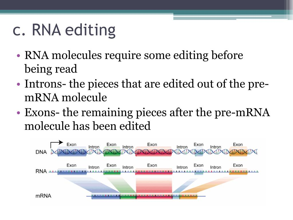 PPT - Chapter 13- RNA and Protein Synthesis PowerPoint ...